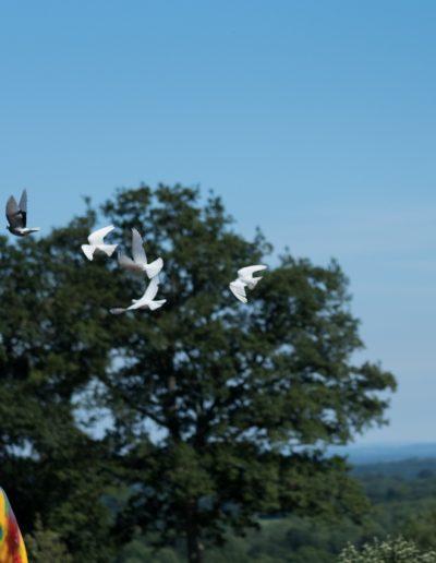 doves flying in the sky